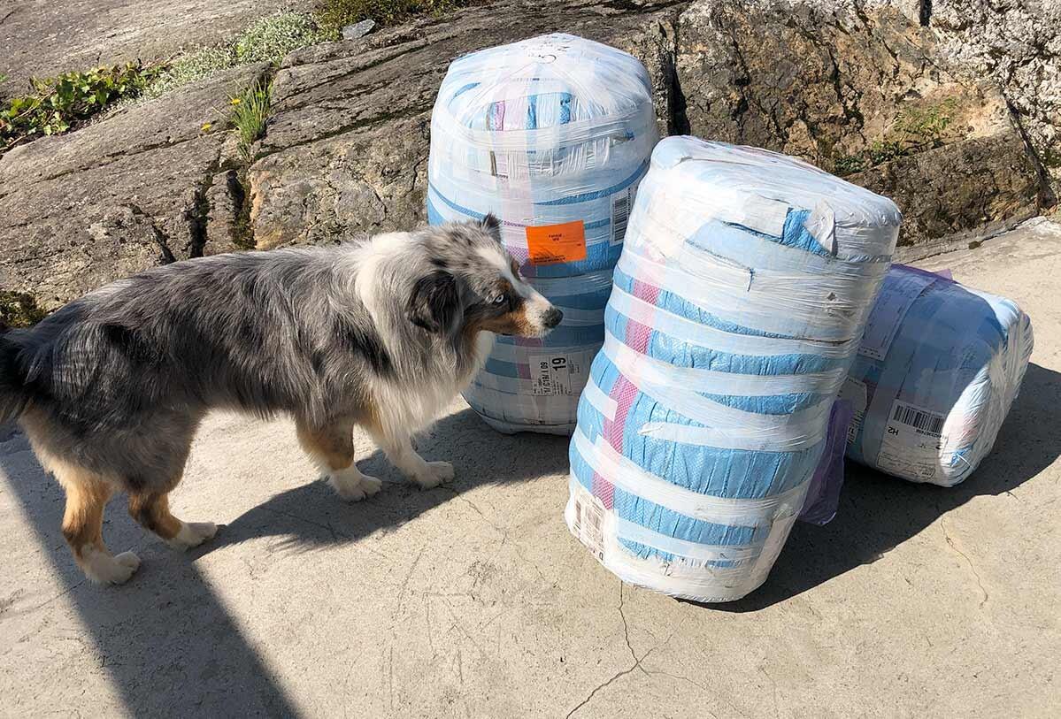 Hund snuser på pakker med tepper